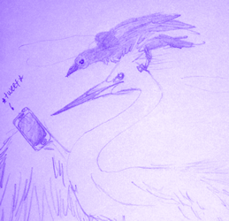Phryne the crow and Blanca the white crane