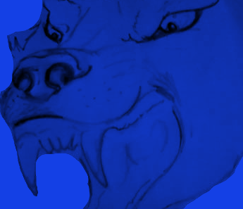 Snarling blue wolf